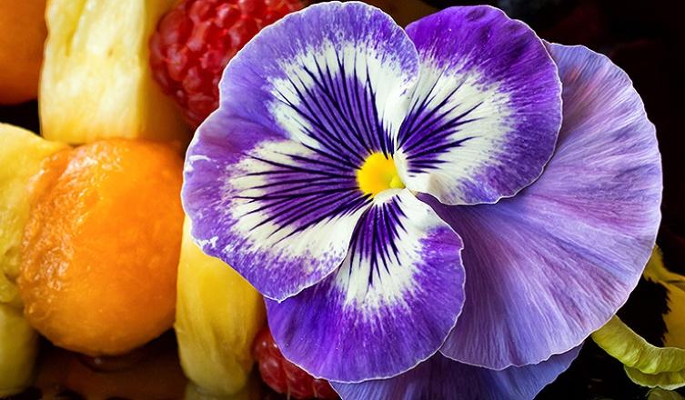 Ehető illatok – 7 gyönyörű virág, ami a tányérodra is kerülhet