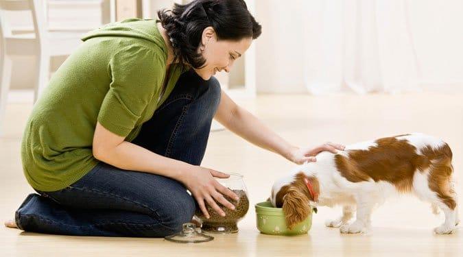 7 dolog, amiből a kutyád nem ehet