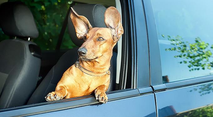7 lecke az életről – kutyáktól