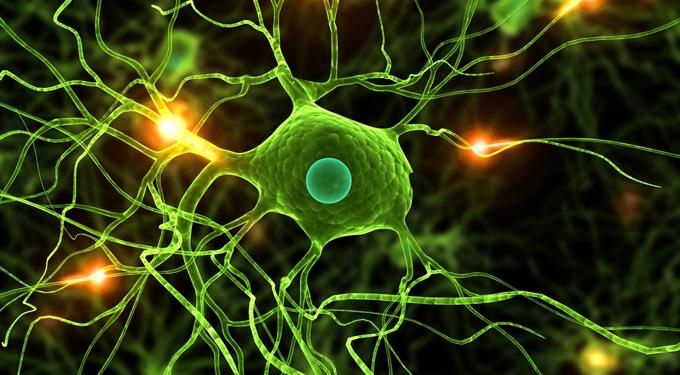 7 lenyűgöző érdekesség az emberi agyról