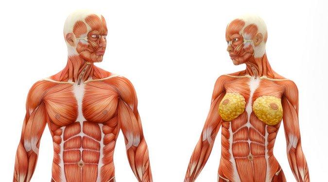 7 lenyűgöző érdekesség az emberi testről
