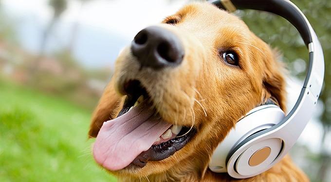 7 meglepő dolog, amit nem tudtál a kutyádról