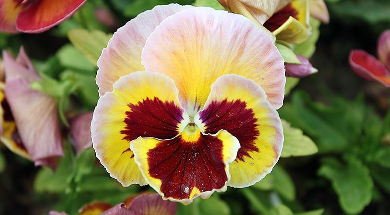 7 meseszép növény, ami késő őszig virágba borítja a teraszt