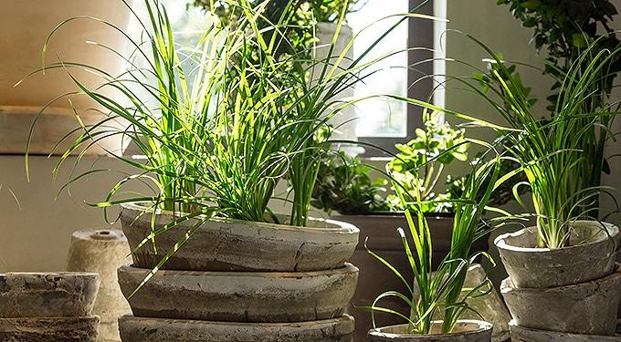 7 nagyon kedvelt szobanövény, árnyékos lakásba is