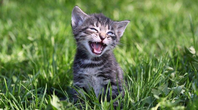 7 nehezen érthető macska szokás