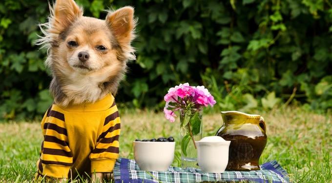 7 szórakoztató családi program kutyával