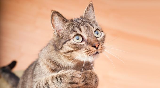 7 tény, ami bizonyítja, hogy a macskáknak természetfeletti képességeik vannak