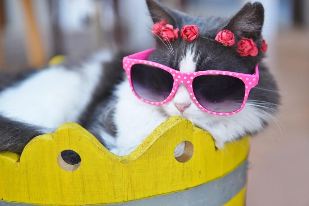 7+1 randi tipp macskáktól és tuti dorombolni fognak a pasik