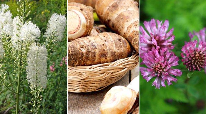 8 gyógynövény a menopauza tüneteire