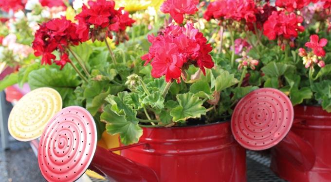 8 gyönyörűen virágzó szobanövény