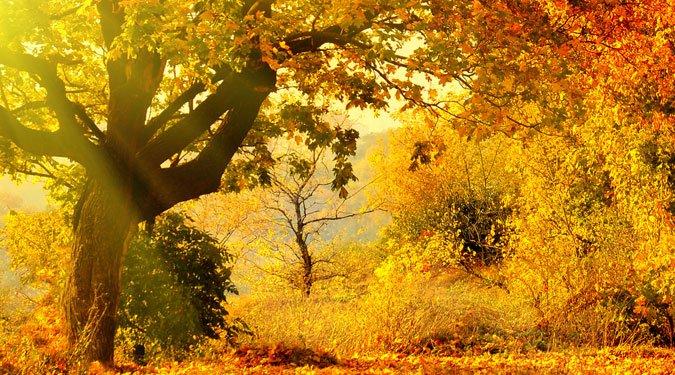 9 ok amiért szeretjük a novembert