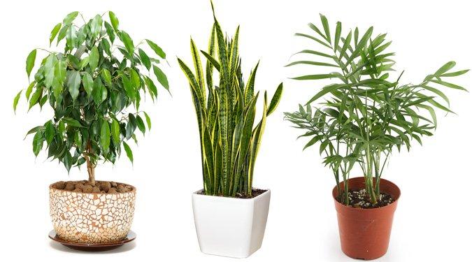 A 10 legnépszerűbb légtisztító szobanövény