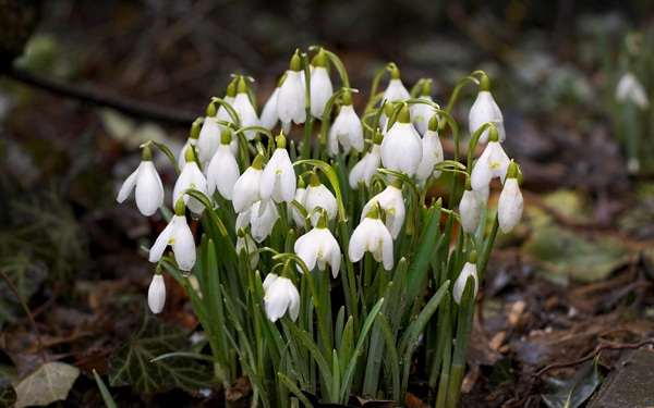 A 7 legfőbb februári kerti teendő
