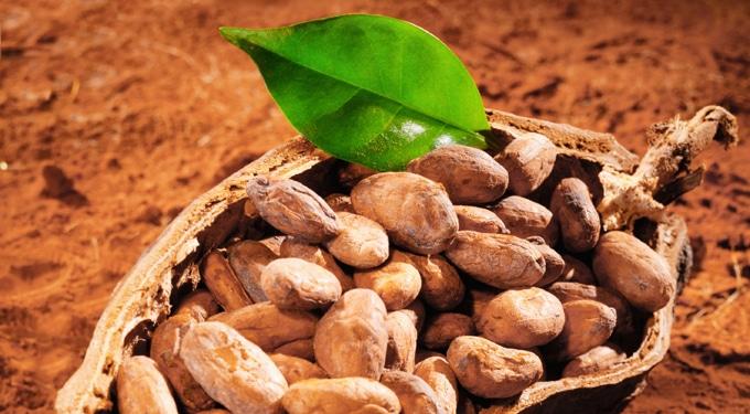 A csokoládé története – A majáktól napjainkig