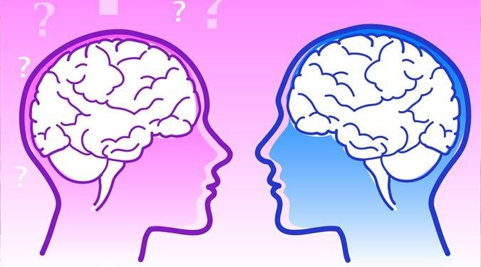 A férfi és női agy közti különbségek