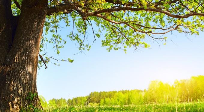 A fa előnyei és hatásai az emberekre