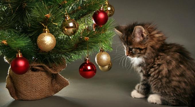 A gyökeres karácsonyfa gondozása