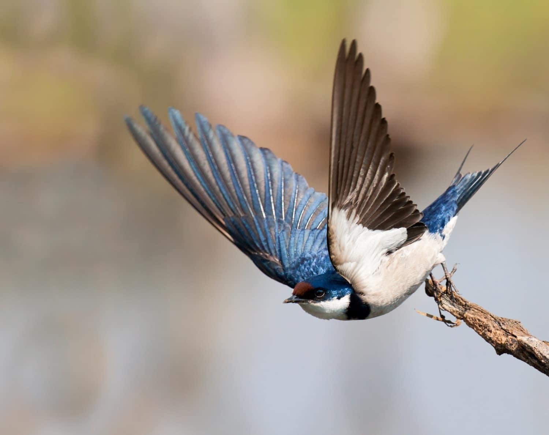 A kakukk és a társkeresés: tudtad, mit jelképeznek költöző madaraink?