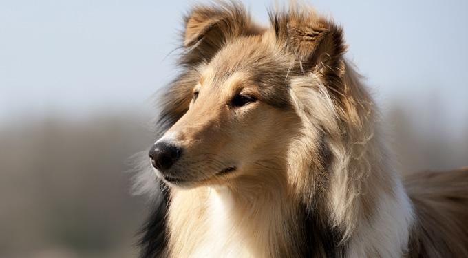 A kutyáknak van megérzésük – Az élővilág és a telepátia