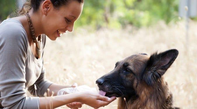 A kutya tartás 10 hatalmas előnye
