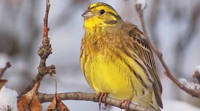 A legérdekesebb itthon telelő madaraink