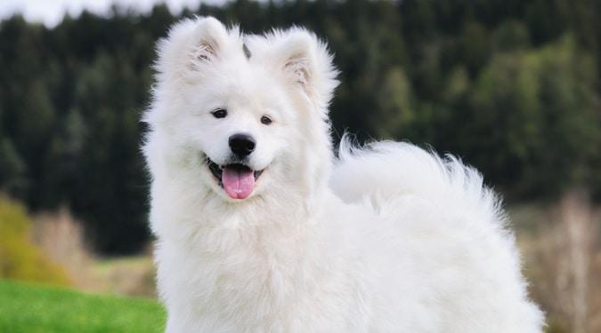A legcukibb kutyafajták