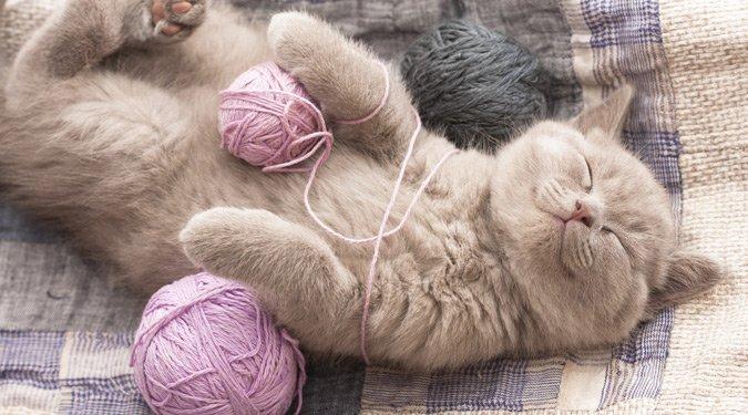 A legcukibb macska pillanatok