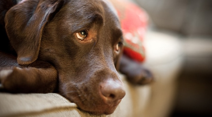 A leggyakoribb, életveszélyes 9 hiba amit a kutyatartók elkövetnek!