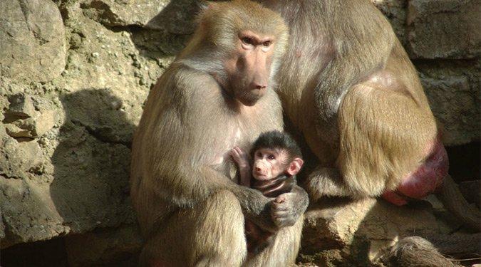 A legklasszabb magyarországi állatkertek