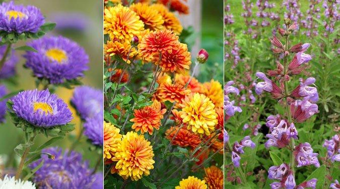 A legszebb őszi kerti virágok