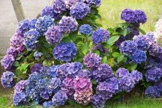 A legszebb őszi virágok