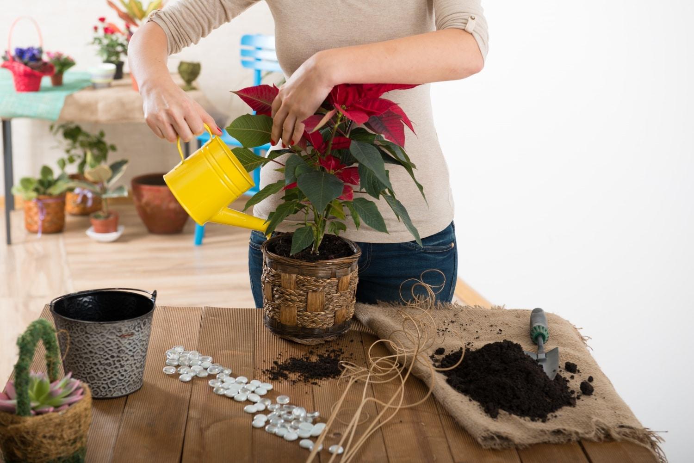 A legszebb szobanövények, amelyek télen is zöldet csempésznek az otthonodba