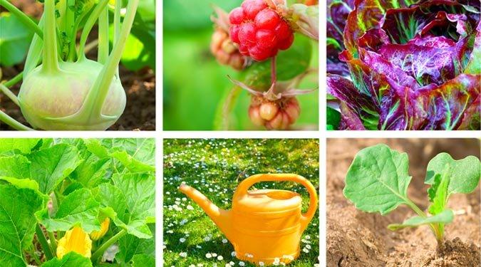 A nyers vegán étrend 10 hatalmas előnye