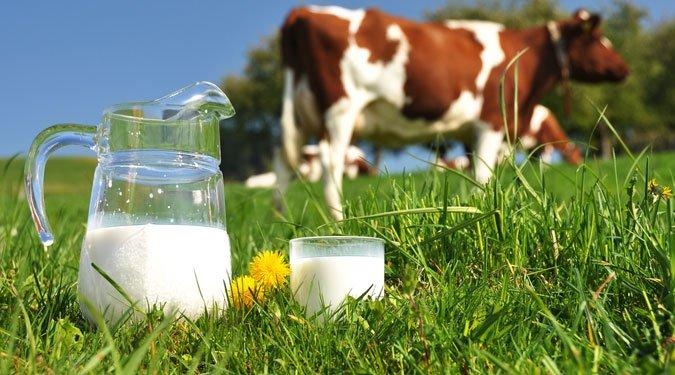 A tej 6 nagyszerű egészségügyi előnye