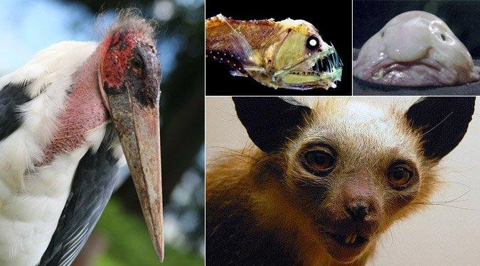 A világ 6 legcsúnyább állata