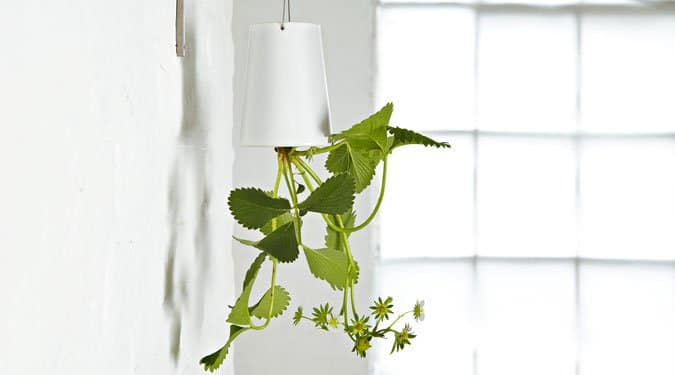 Alternatív kertek a lakásban