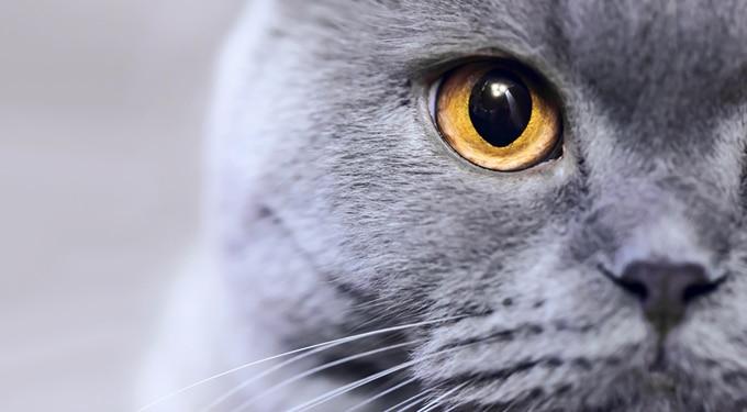 Bájos szőrpamacs, vagy gyilkológép: az ember miatt ilyen vadak még ma is a macskák?