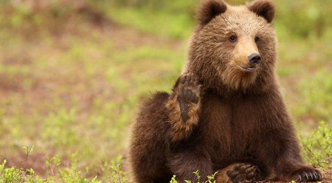 Botrány! Ezúttal egy medvebocsot öltek meg az állatkertben – Állítólag a saját érdekében
