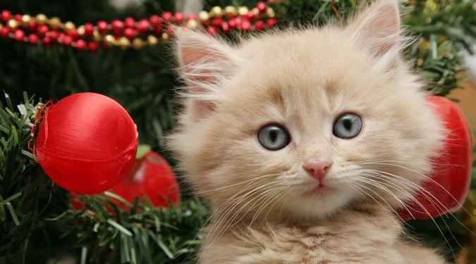 Cuki karácsonyi kisállat fotók