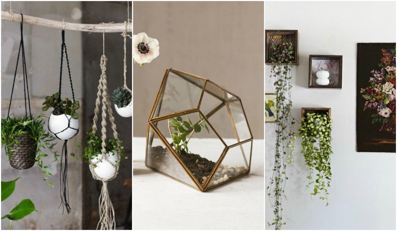 Dekorálj növényekkel: 5+1 ötletes megoldás nem csak kis lakásokba