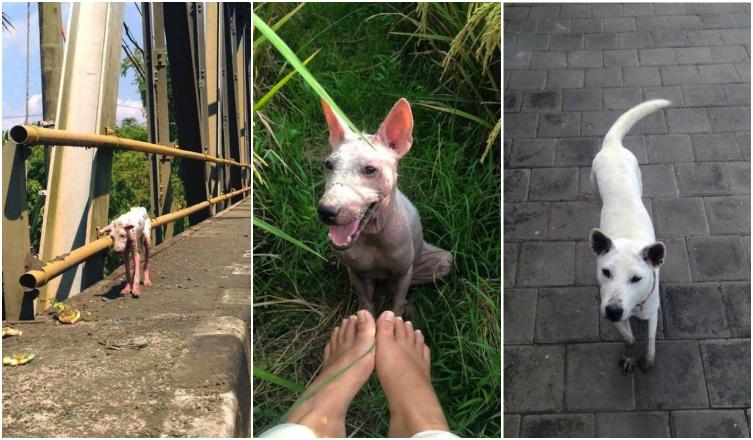 Egy kóbor kutya hihetetlen átalakulása – Nézd meg a megható képeket!