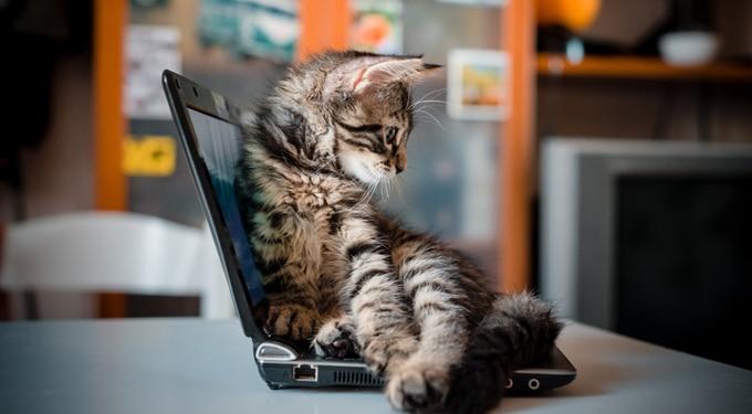 Ezek a tudományos tények bizonyítják, hogy a macskák okosabbak nálunk