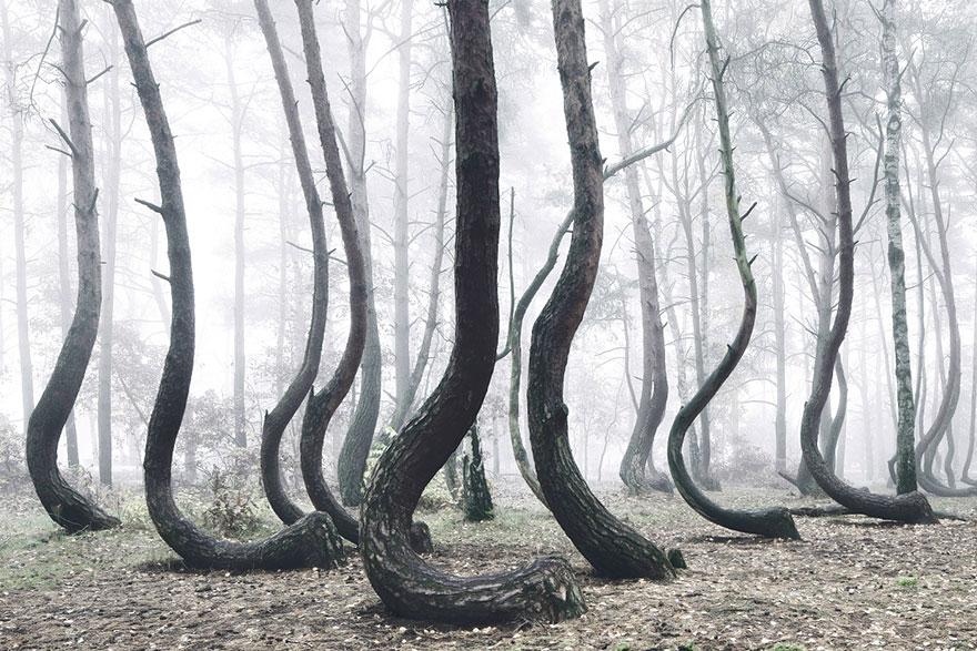 Ezek a világ legmisztikusabb erdői!