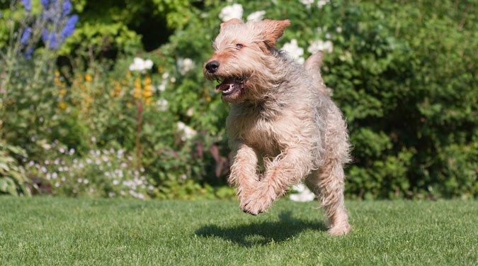Ezekre vigyázz, ha a kutyád a kertben van!