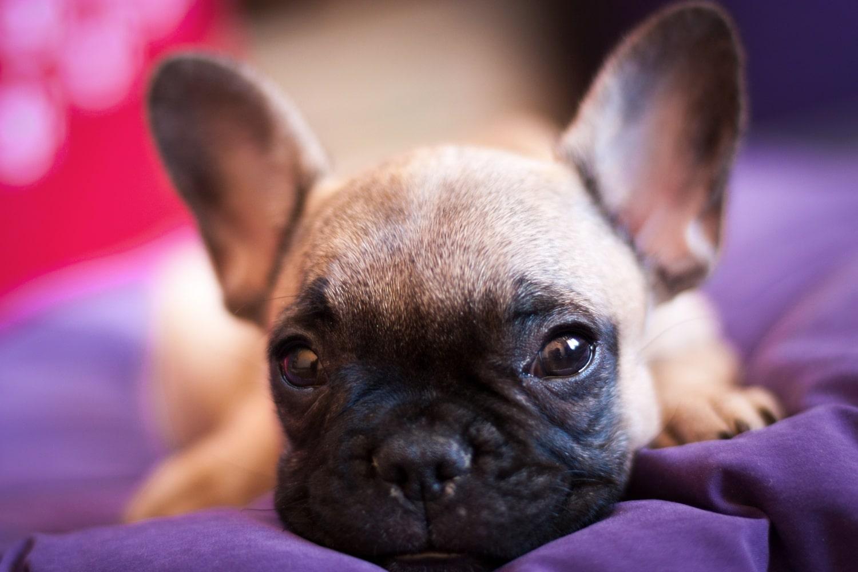 Ezektől a tündéri videóktól még jobban imádni fogod a kutyákat4