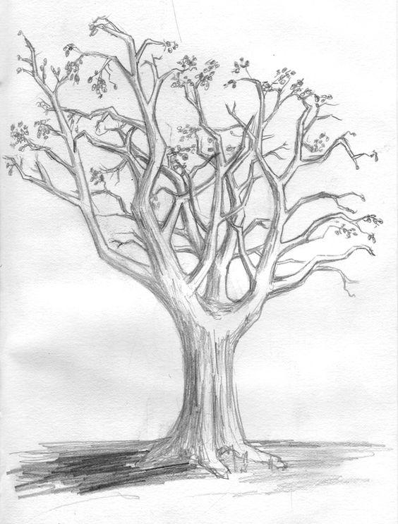Fa-rajz teszt – Rajzolj és ismerd meg magadat közelebbről!