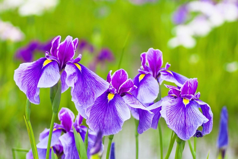 Februárra már virágba borulhat az erkélyed! A legkorábban nyíló kinti növények
