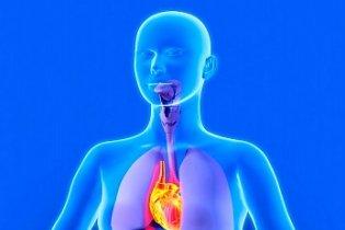 Felfedezték a szívverésért felelős géneket