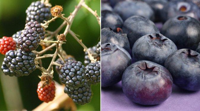 Finom, egészséges, mutatós és KÉK ételek
