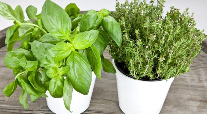 Frissesség a konyhában: 7 fűszernövény, amit érdemes kéznél tartanod